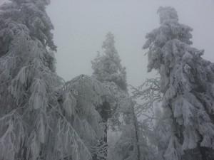 winterwonderland17