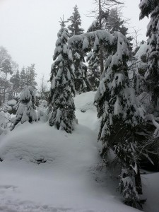 winterwonderland9
