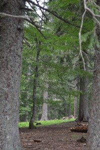 wichtelwald